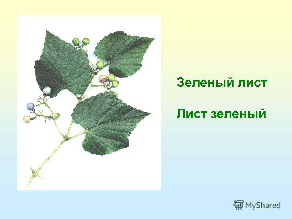 Зеленый лист Лист зеленый