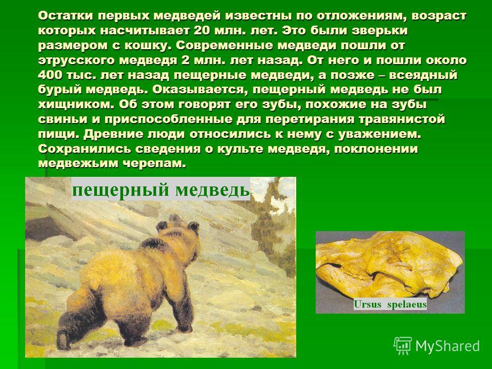 Остатки первых медведей известны по отложениям, возраст которых насчитывает 20 млн. лет. Это были зверьки размером с кошку. Современные медведи пошли от этрусского медведя 2 млн. лет назад. От него и пошли около 400 тыс. лет назад пещерные медведи, а
