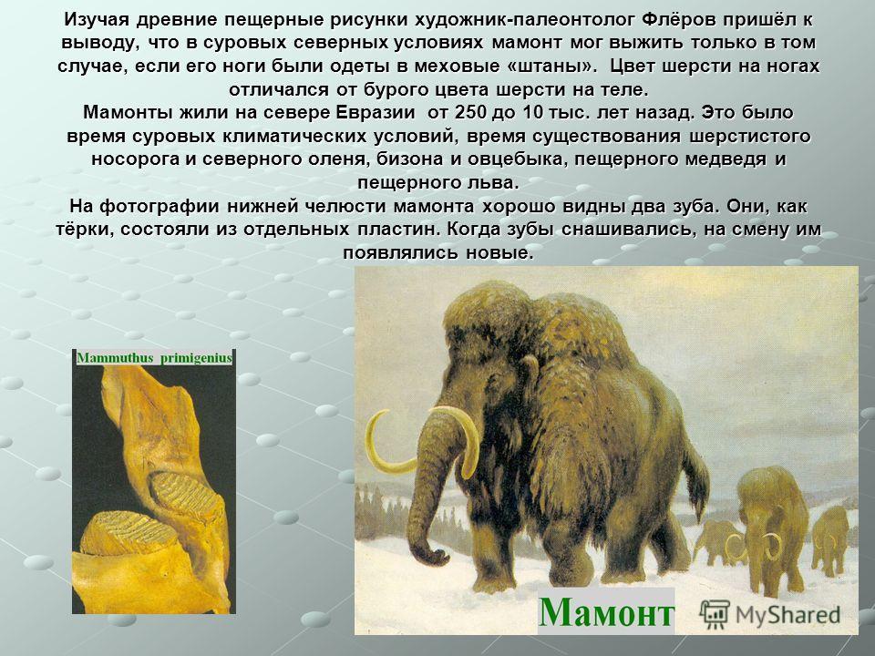 Изучая древние пещерные рисунки художник-палеонтолог Флёров пришёл к выводу, что в суровых северных условиях мамонт мог выжить только в том случае, если его ноги были одеты в меховые «штаны». Цвет шерсти на ногах отличался от бурого цвета шерсти на т