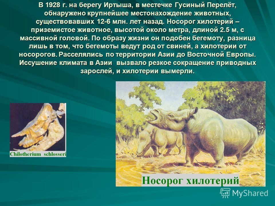 В 1928 г. на берегу Иртыша, в местечке Гусиный Перелёт, обнаружено крупнейшее местонахождение животных, существовавших 12-6 млн. лет назад. Носорог хилотерий – приземистое животное, высотой около метра, длиной 2.5 м, с массивной головой. По образу жи