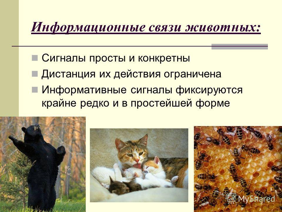 Информационные связи животных: Сигналы просты и конкретны Дистанция их действия ограничена Информативные сигналы фиксируются крайне редко и в простейшей форме