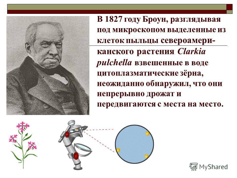 В 1827 году Броун, разглядывая под микроскопом выделенные из клеток пыльцы североамери- канского растения Clarkia pulchella взвешенные в воде цитоплазматические зёрна, неожиданно обнаружил, что они непрерывно дрожат и передвигаются с места на место.