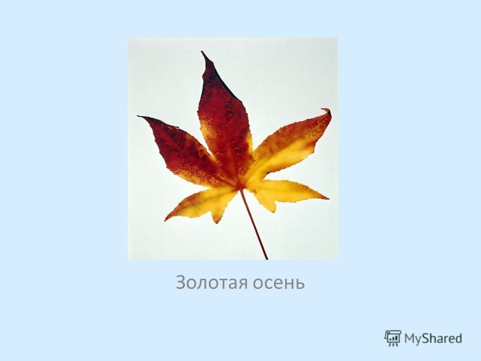 Рисует осень свой портрет, На краски не скупится. Каких оттенков только нет, Всё блещет и искрится. На ней манто из облаков, Корона – листья клёна, В руках букет прекрасных снов, Колье – из бус зелёных. Золотая осень