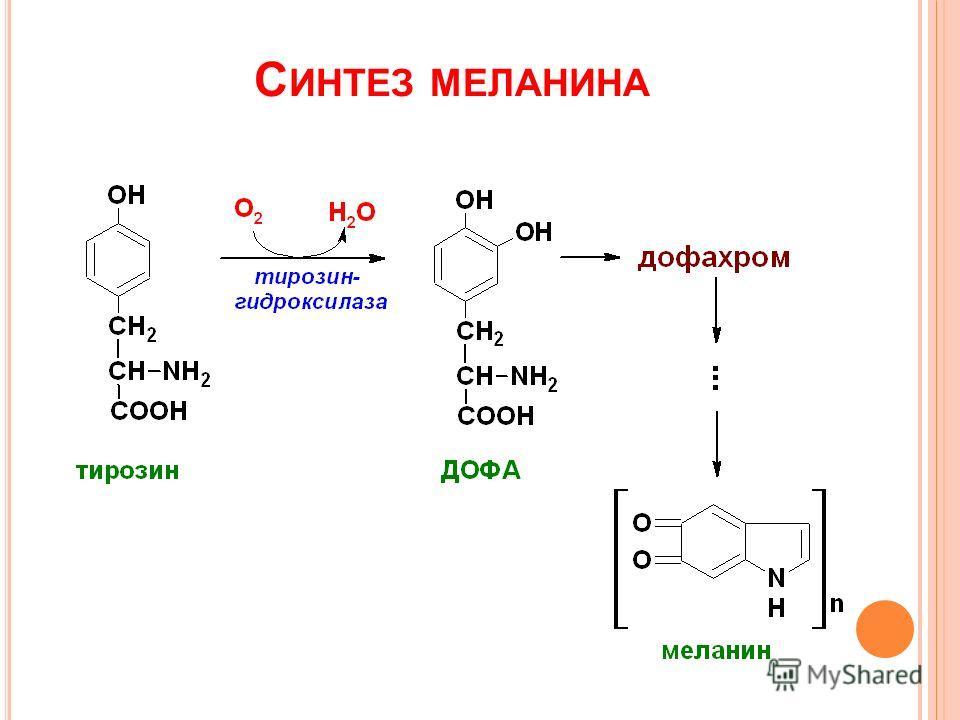 С ИНТЕЗ МЕЛАНИНА
