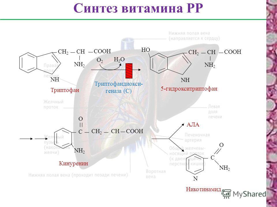 Синтез витамина РР Триптофан NНNН СН 2 СН СООН NН2NН2 О2О2 Н2ОН2О NНNН СН 2 СН СООН NН2NН2 НО 5-гидрокситриптофан Триптофандиокси- геназа (С) С СН 2 СНСООН О NН2NН2 Кинуренин АЛА С О N NН2NН2 Никотинамид