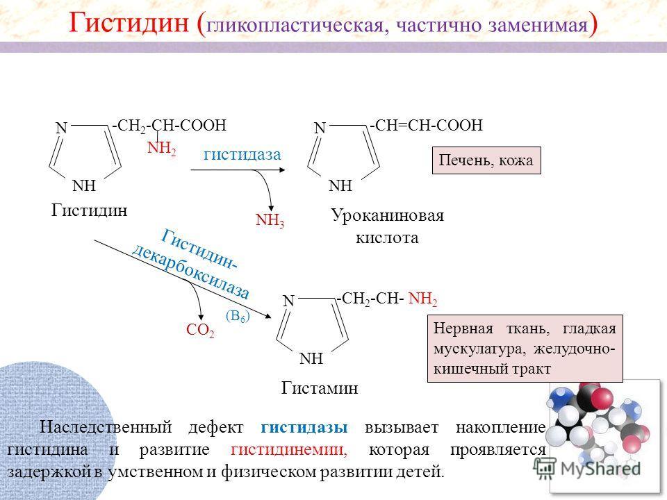 NH 2 N NH -CH 2 -CH-COOH NH 2 NH 3 N NH -CH=CH-COOH гистидаза Гистидин ( гликопластическая, частично заменимая ) Гистидин Уроканиновая кислота Печень, кожа Гистидин- декарбоксилаза СО 2 N NH -CH 2 -CH- (В 6 ) Гистамин Нервная ткань, гладкая мускулату