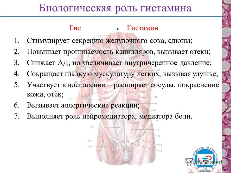 Биологическая роль гистамина 1.Стимулирует секрецию желудочного сока, слюны; 2.Повышает проницаемость капилляров, вызывает отеки; 3.Снижает АД, но увеличивает внутричерепное давление; 4.Сокращает гладкую мускулатуру легких, вызывая удушье; 5.Участвуе