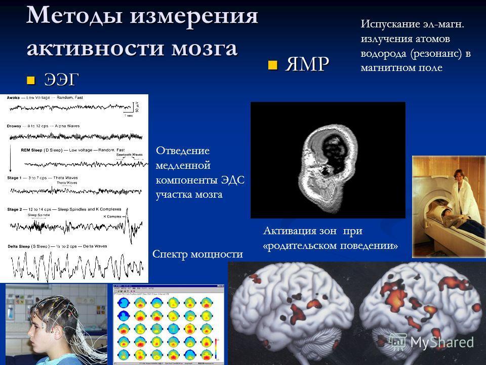 Методы измерения активности мозга ЭЭГ ЭЭГ ЯМР ЯМР Отведение медленной компоненты ЭДС участка мозга Испускание эл-магн. излучения атомов водорода (резонанс) в магнитном поле Спектр мощности Активация зон при «родительском поведении»