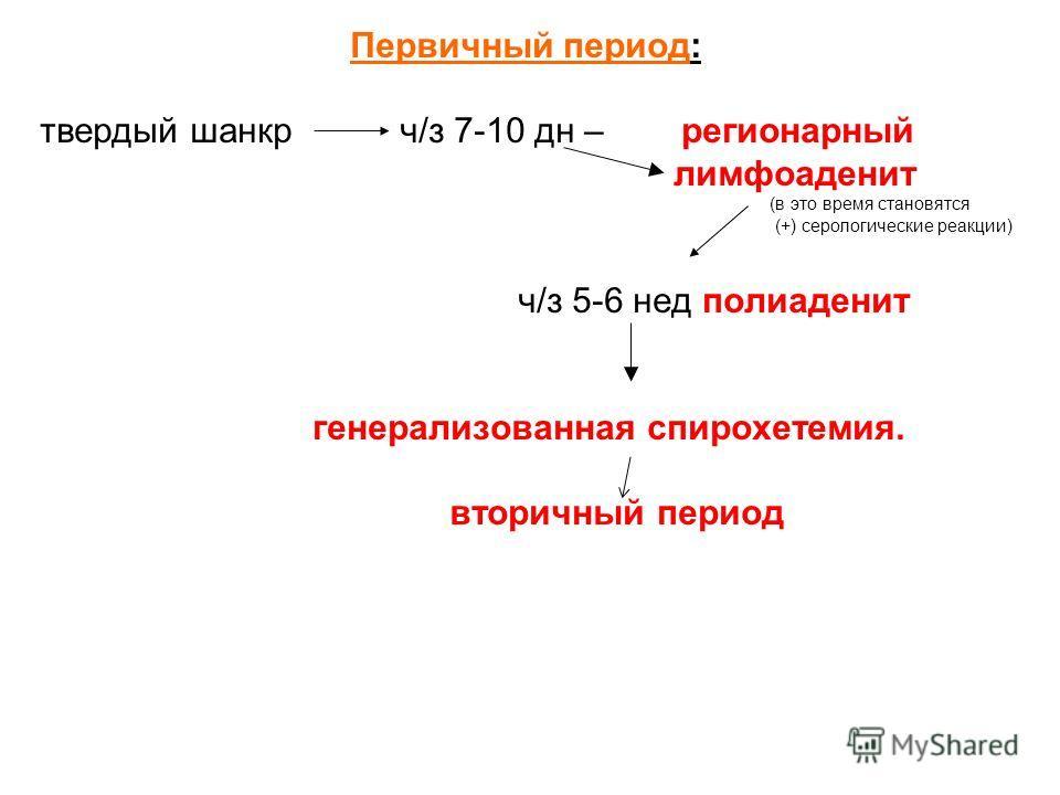 Первичный период: твердый шанкр ч/з 7-10 дн – регионарный лимфоаденит (в это время становятся (+) серологические реакции) ч/з 5-6 нед полиаденит генерализованная спирохетемия. вторичный период
