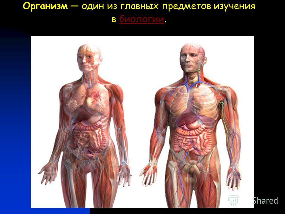 Организм один из главных предметов изучения в биологии.биологии