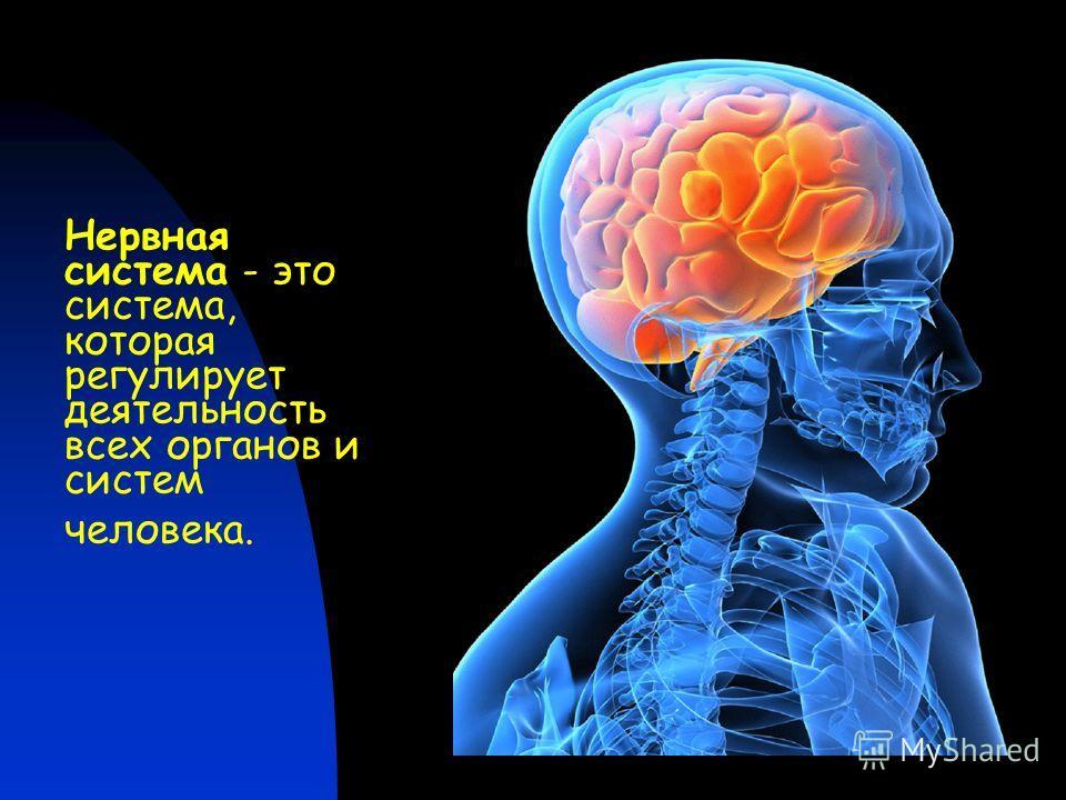 Нервная система - это система, которая регулирует деятельность всех органов и систем человека.