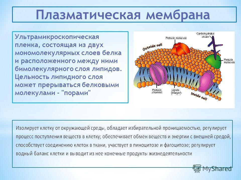 Ультрамикроскопическая пленка, состоящая из двух мономолекулярных слоев белка и расположенного между ними бимолекулярного слоя липидов. Цельность липидного слоя может прерываться белковыми молекулами - порами Плазматическая мембрана