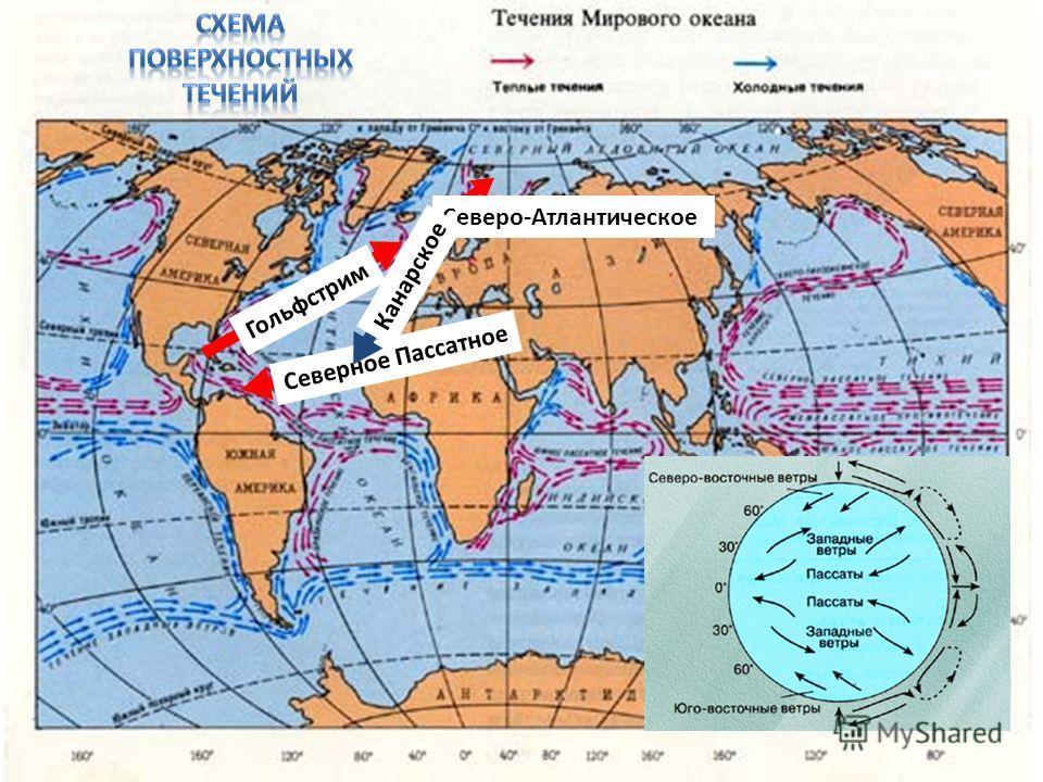 Северное Пассатное Гольфстрим Северо-Атлантическое Канарское