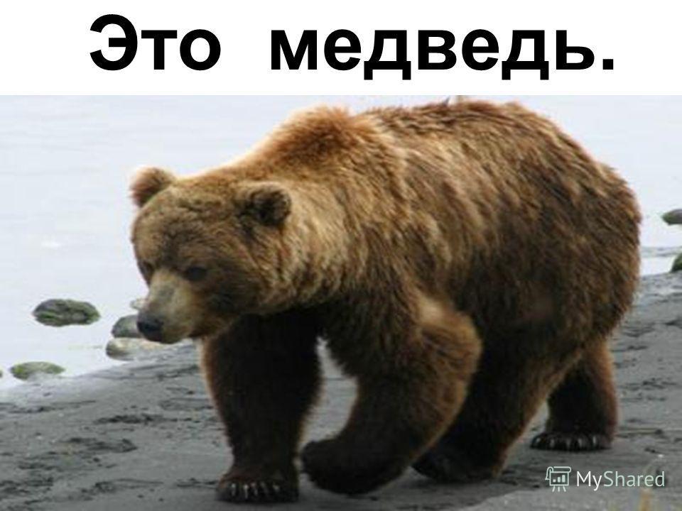 Это медведь.