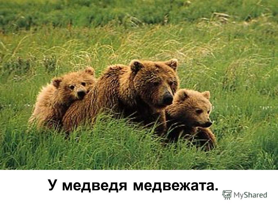 У медведя медвежата.