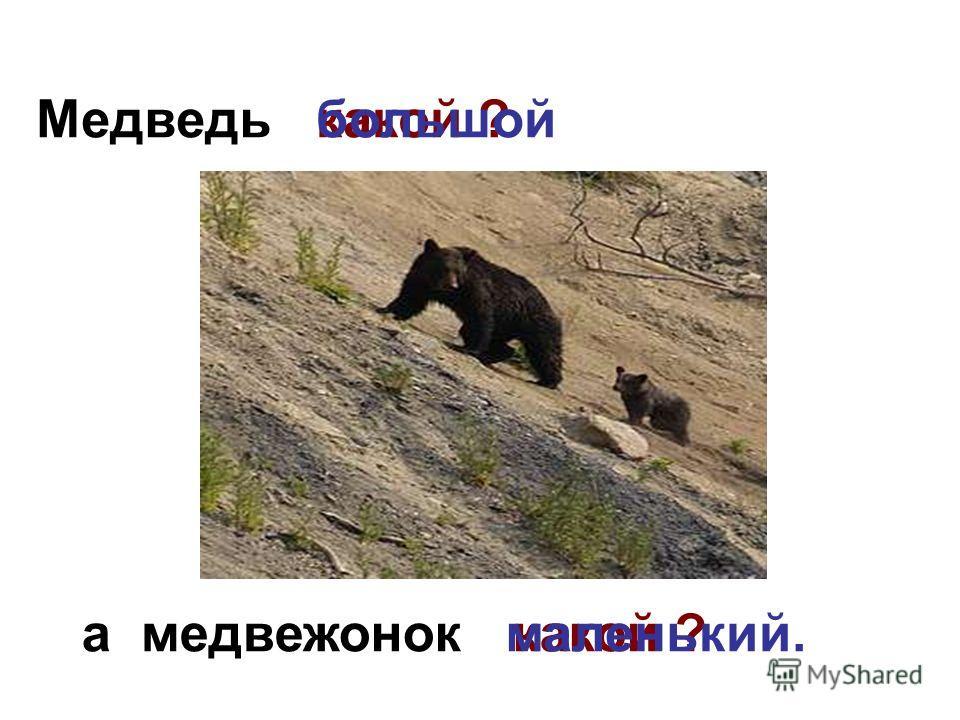 Медведь а медвежонок какой ?большой какой ? маленький.