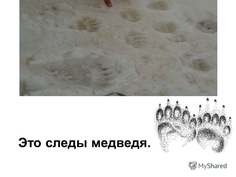 Это следы медведя.