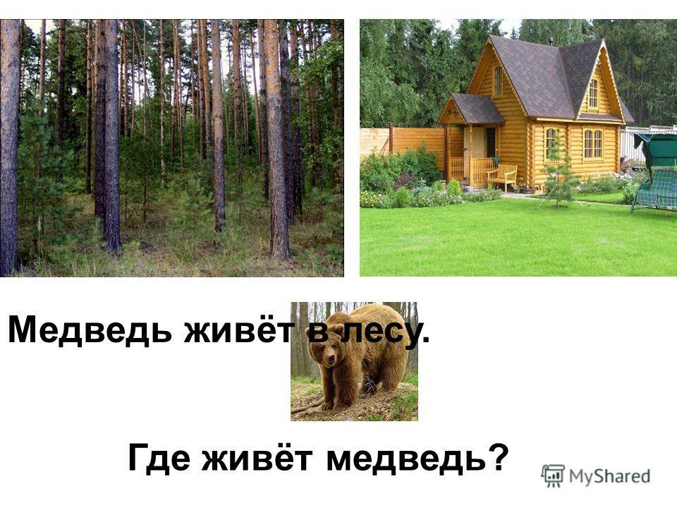 Где живёт медведь? Медведь живёт в лесу.