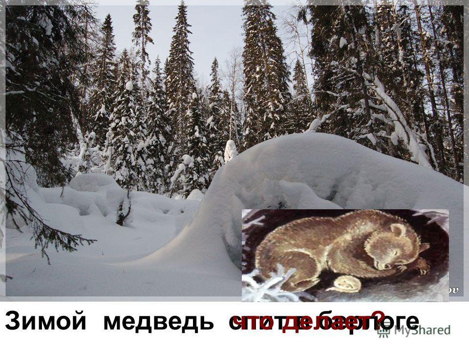 Зимой медведьспит в берлогечто делает?