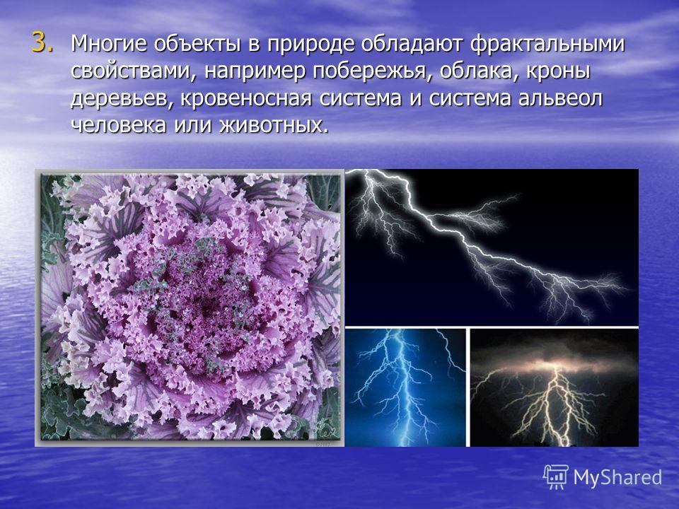 3. Многие объекты в природе обладают фрактальными свойствами, например побережья, облака, кроны деревьев, кровеносная система и система альвеол человека или животных.