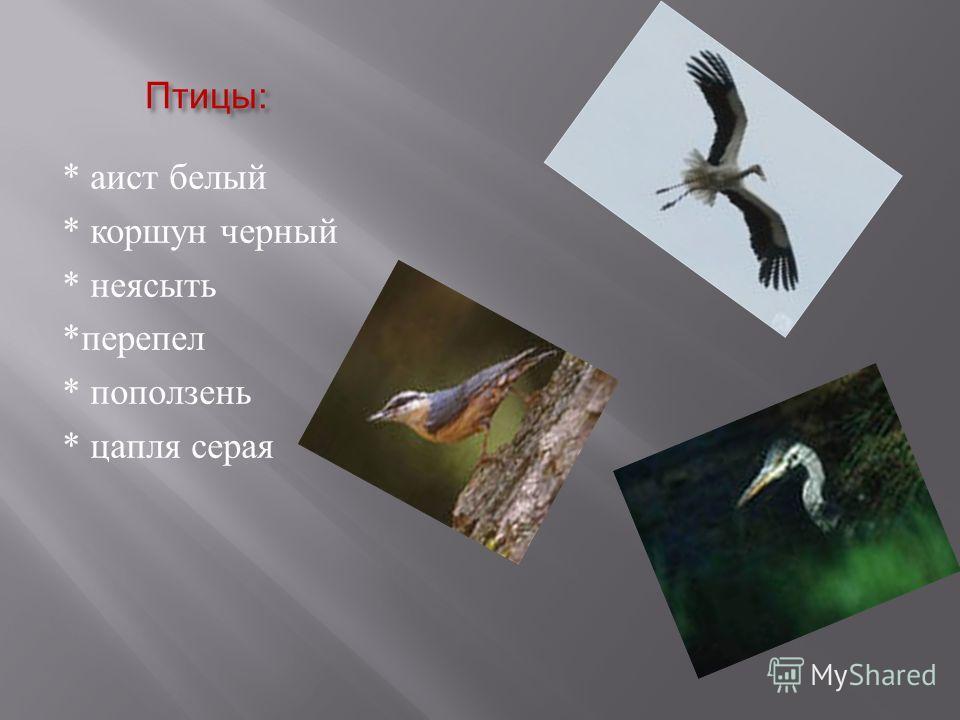 Птицы : * аист белый * коршун черный * неясыть * перепел * поползень * цапля серая