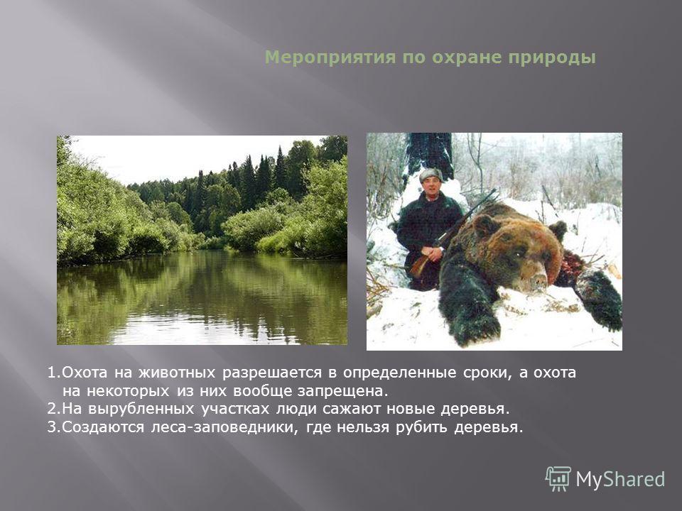 1.Охота на животных разрешается в определенные сроки, а охота на некоторых из них вообще запрещена. 2.На вырубленных участках люди сажают новые деревья. 3.Создаются леса-заповедники, где нельзя рубить деревья. Мероприятия по охране природы