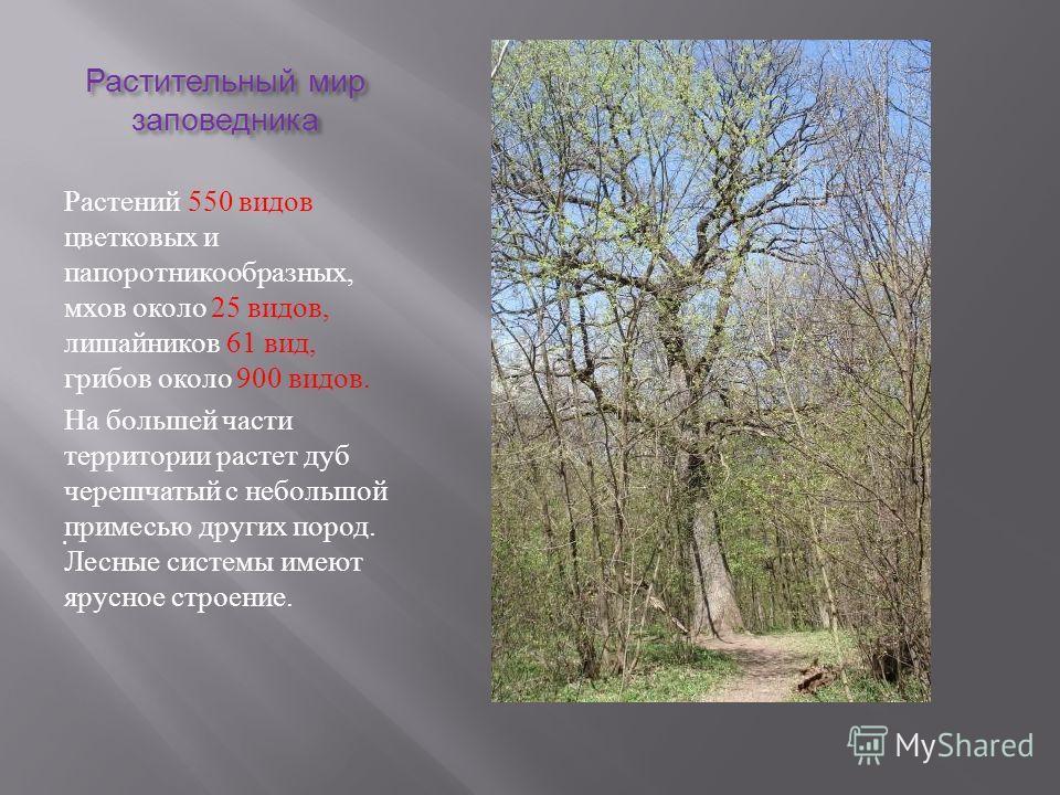 . Растительный мир заповедника Растений 550 видов цветковых и папоротникообразных, мхов около 25 видов, лишайников 61 вид, грибов около 900 видов. На большей части территории растет дуб черешчатый с небольшой примесью других пород. Лесные системы име