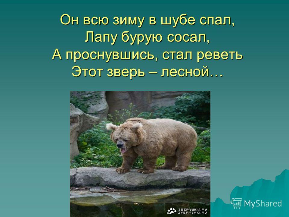 Он всю зиму в шубе спал, Лапу бурую сосал, А проснувшись, стал реветь Этот зверь – лесной…
