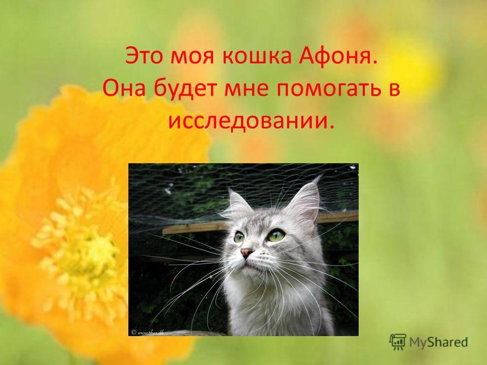 Это моя кошка Афоня. Она будет мне помогать в исследовании.