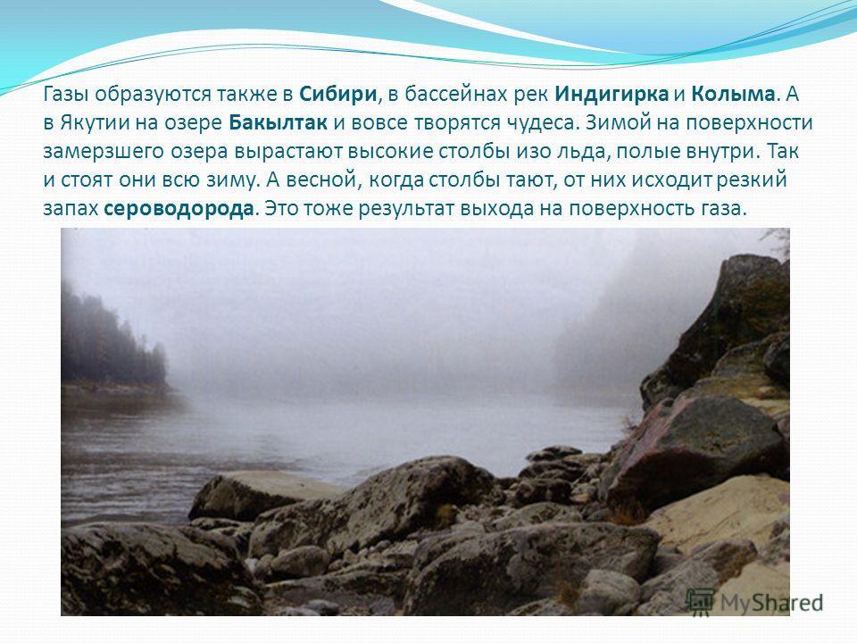 Газы образуются также в Сибири, в бассейнах рек Индигирка и Колыма. А в Якутии на озере Бакылтак и вовсе творятся чудеса. Зимой на поверхности замерзшего озера вырастают высокие столбы изо льда, полые внутри. Так и стоят они всю зиму. А весной, когда