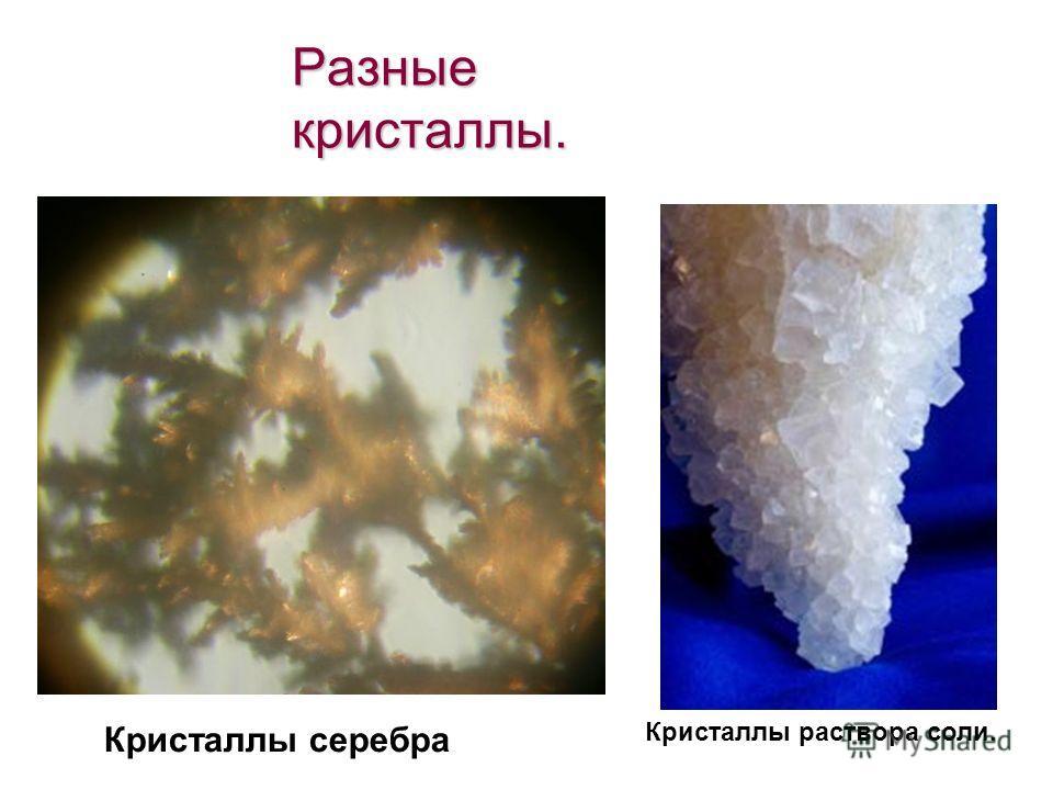 Разные кристаллы. Кристаллы серебра Кристаллы раствора соли.