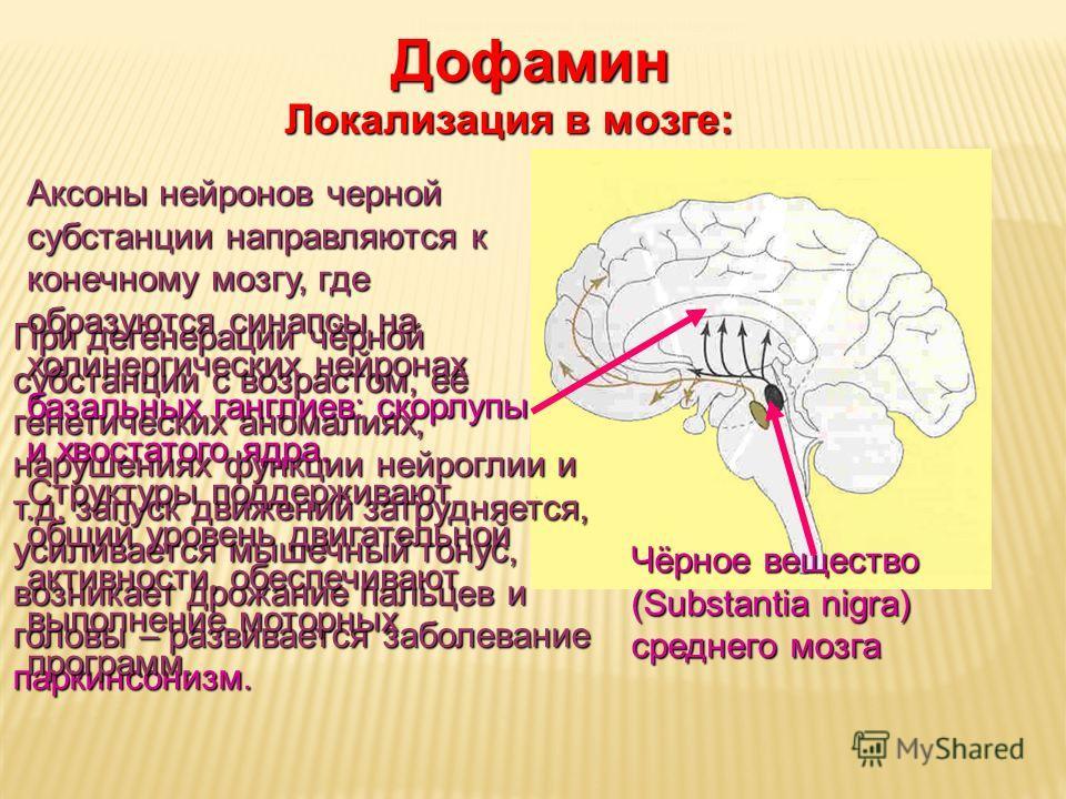 Дневное отделение фармацевтического факультета Чёрное вещество (Substantia nigra) среднего мозга Дофамин Локализация в мозге: При дегенерации чёрной субстанции с возрастом, её генетических аномалиях, нарушениях функции нейроглии и т.д. запуск движени