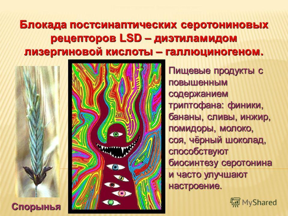 Дневное отделение фармацевтического факультета Блокада постсинаптических серотониновых рецепторов LSD – диэтиламидом лизергиновой кислоты – галлюциногеном. Спорынья Пищевые продукты с повышенным содержанием триптофана: финики, бананы, сливы, инжир, п