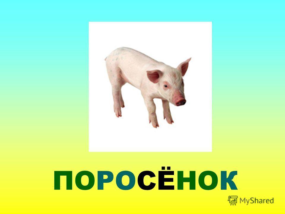 ПОРОСЁНОК