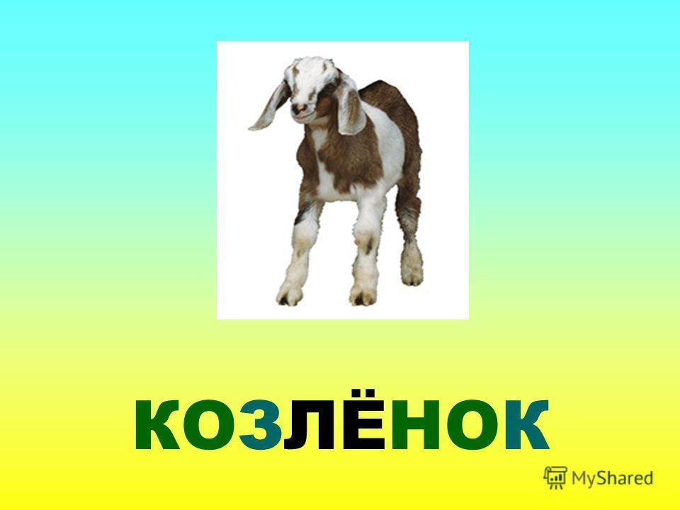 КОЗЛЁНОК