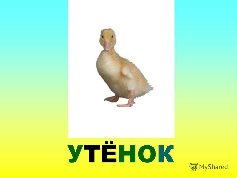 УТЁНОК