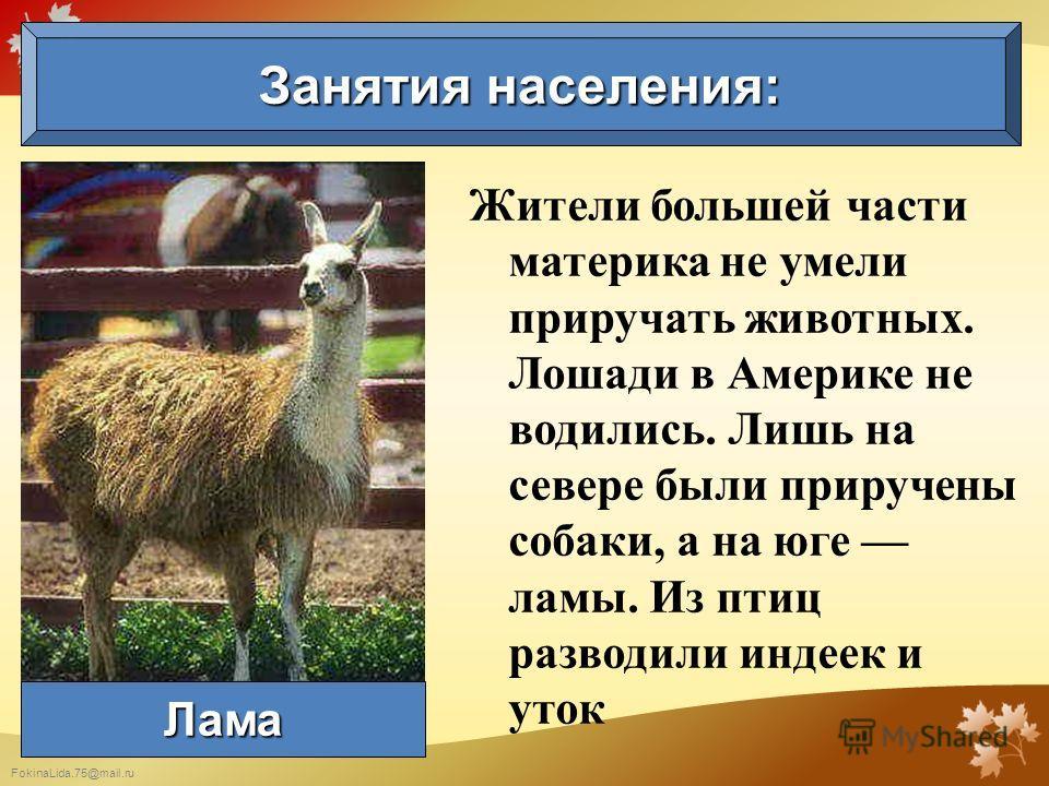 FokinaLida.75@mail.ru Жители большей части материка не умели приручать животных. Лошади в Америке не водились. Лишь на севере были приручены собаки, а на юге ламы. Из птиц разводили индеек и уток Занятия населения: Лама