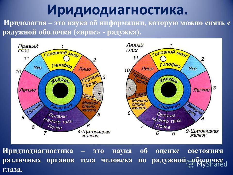 Иридиодиагностика. Иридиодиагностика – это наука об оценке состояния различных органов тела человека по радужной оболочке глаза. Иридология – это наука об информации, которую можно снять с радужной оболочки («ирис» - радужка).