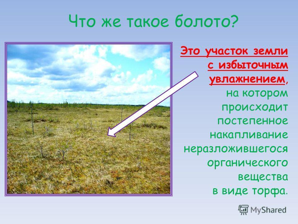 Что же такое болото? Это участок земли с избыточным увлажнением, на котором происходит постепенное накапливание неразложившегося органического вещества в виде торфа.