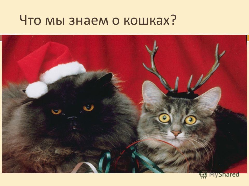 Что мы знаем о кошках ? Сколько лет живут кошки ? От 12 до 20 лет Сколько весят кошки ? От 3 до 6 кг Чей укус опаснее : собаки, кошки или человека ? Человека, у него во рту больше микробов Какие уникальные свойства есть у кошки ? Всегда падает на лап