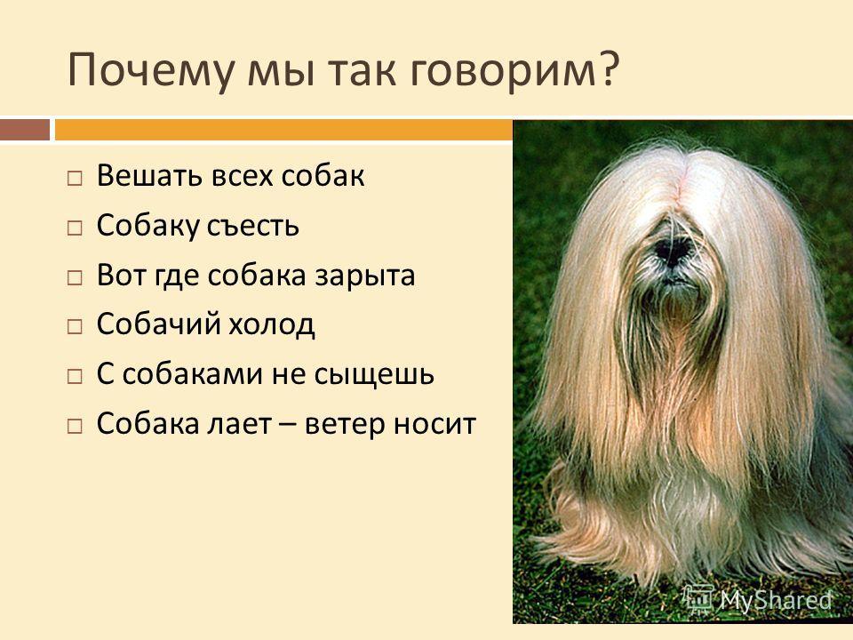 Почему мы так говорим ? Вешать всех собак Собаку съесть Вот где собака зарыта Собачий холод С собаками не сыщешь Собака лает – ветер носит
