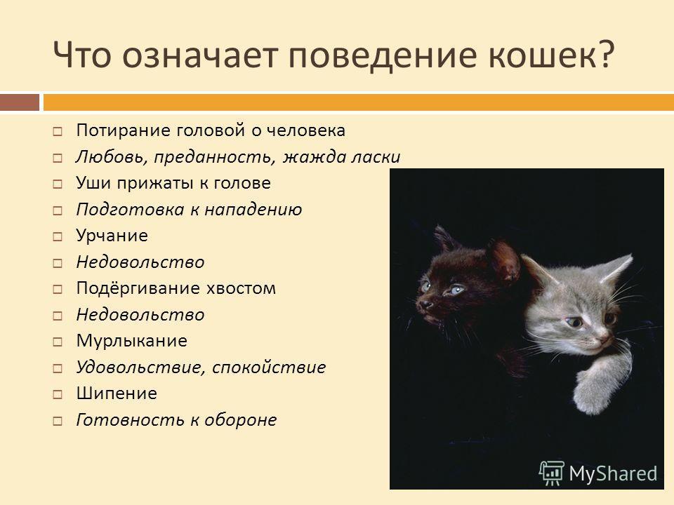 Что означает поведение кошек ? Потирание головой о человека Любовь, преданность, жажда ласки Уши прижаты к голове Подготовка к нападению Урчание Недовольство Подёргивание хвостом Недовольство Мурлыкание Удовольствие, спокойствие Шипение Готовность к