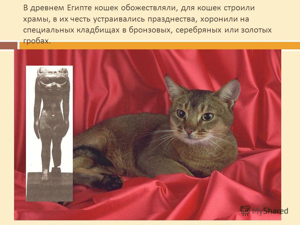 В древнем Египте кошек обожествляли, для кошек строили храмы, в их честь устраивались празднества, хоронили на специальных кладбищах в бронзовых, серебряных или золотых гробах.