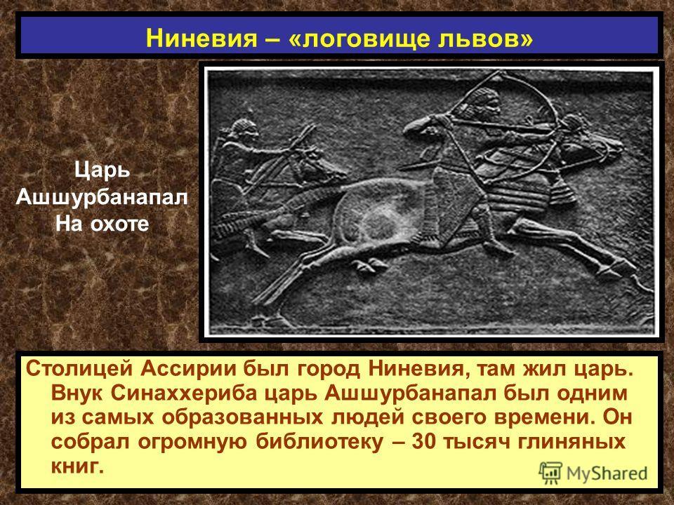 Столицей Ассирии был город Ниневия, там жил царь. Внук Синаххериба царь Ашшурбанапал был одним из самых образованных людей своего времени. Он собрал огромную библиотеку – 30 тысяч глиняных книг. Ниневия – «логовище львов» Царь Ашшурбанапал На охоте