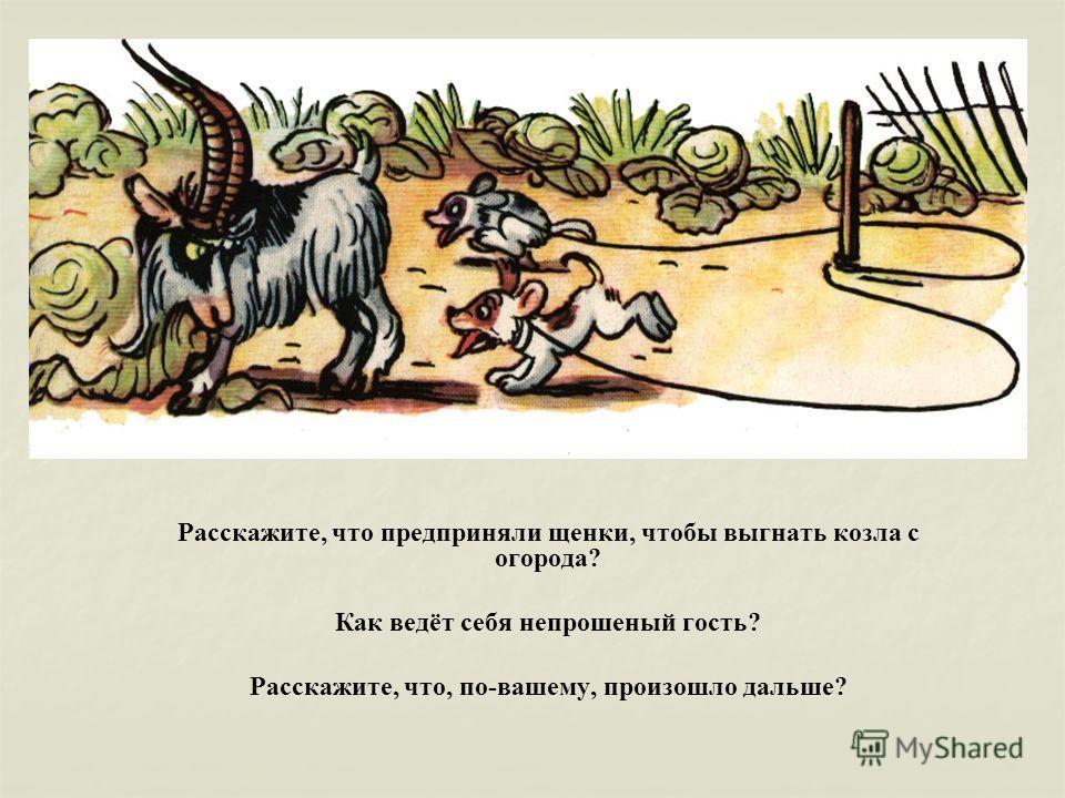 Расскажите, что предприняли щенки, чтобы выгнать козла с огорода? Как ведёт себя непрошеный гость? Расскажите, что, по-вашему, произошло дальше?