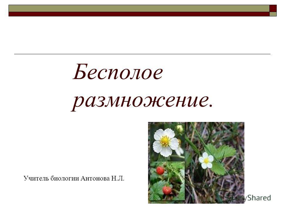 Бесполое размножение. Учитель биологии Антонова Н.Л.