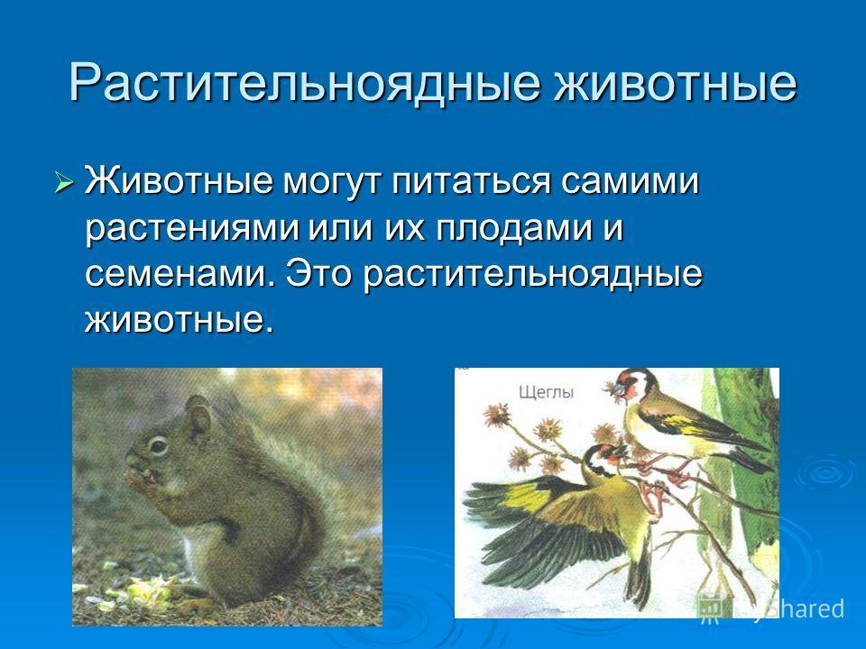 Растительноядные животные Животные могут питаться самими растениями или их плодами и семенами. Это растительноядные животные. Животные могут питаться самими растениями или их плодами и семенами. Это растительноядные животные.