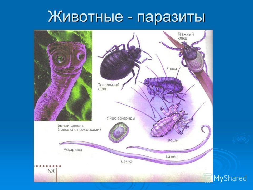 очистка от паразитов отзывы