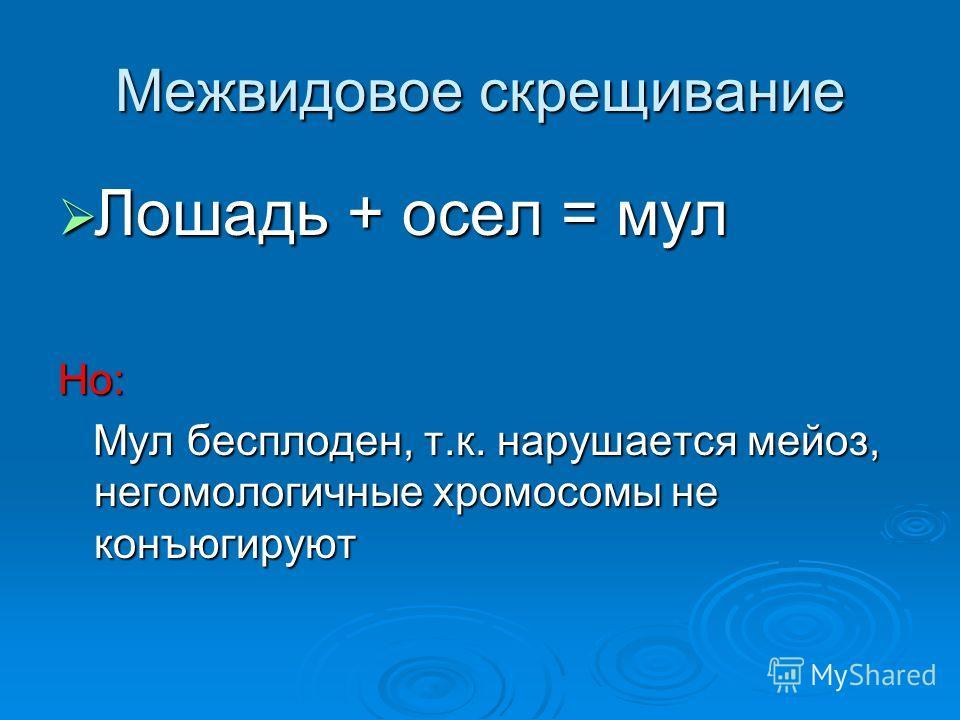 Межвидовое скрещивание Лошадь + осел = мул Лошадь + осел = мулНо: Мул бесплоден, т.к. нарушается мейоз, негомологичные хромосомы не конъюгируют Мул бесплоден, т.к. нарушается мейоз, негомологичные хромосомы не конъюгируют