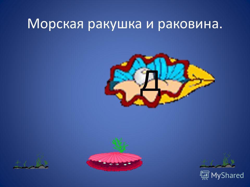 Морская ракушка и раковина. Д